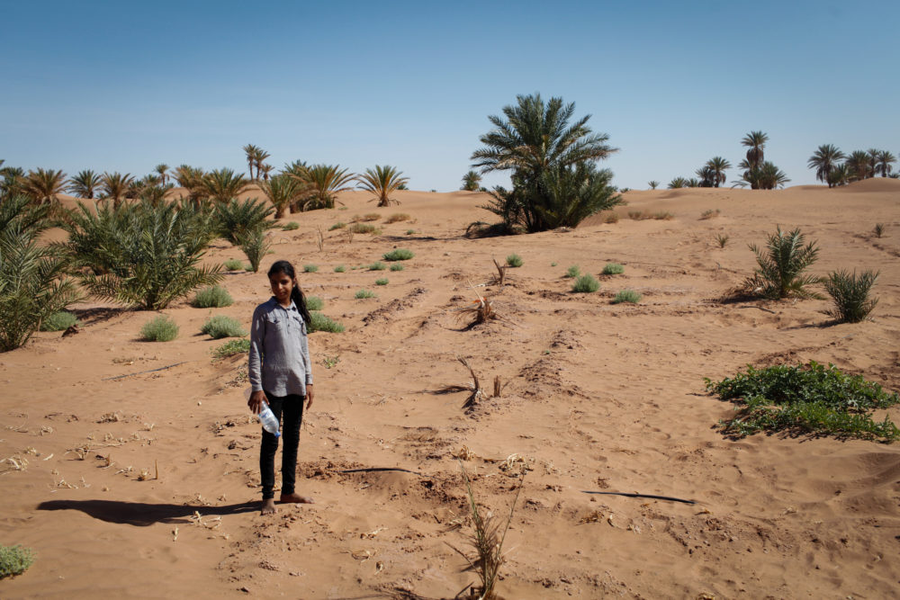 A girl from M'hamid stands amongst newly planted palms near the festival grounds, part of the efforts against desertification.