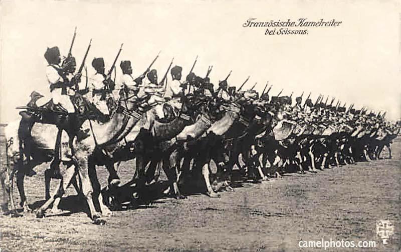 Camel corps, Somalia