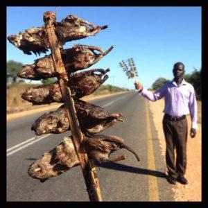 Malawi mice!